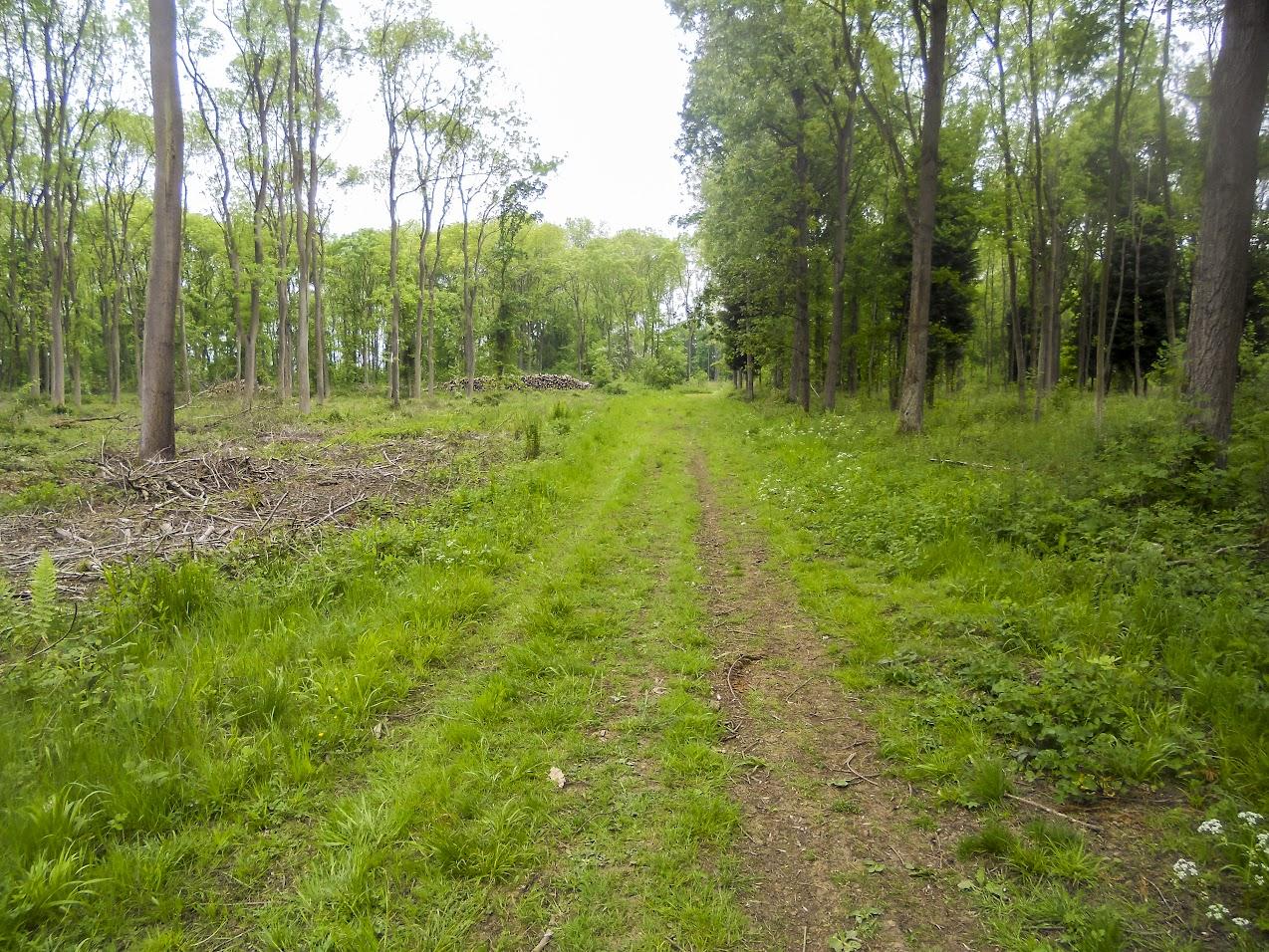 Plungar Woods