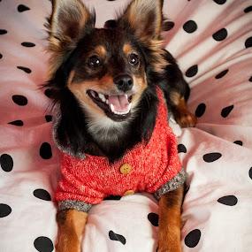 Cutie. by Eliani Miranda - Animals - Dogs Portraits ( red, puppy, dog, nose, small )