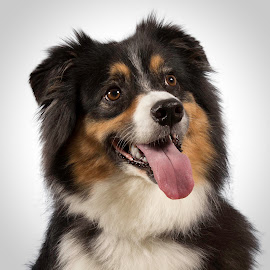 Rosa by Ginger Wlasuk - Animals - Dogs Portraits ( color, dog portrait, happy dog, dog, portrait )