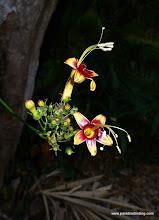Photo: Fancy flower at PV Botanical Gardens