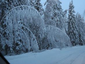 Photo: Puut ovat nöyriä märän lumen taivuttamina 16.1.2012.. Sininen hämärä alkaa laskeutua - ei ollut aikaa odottaa 10 - 15 minuuttia - kuvattu tuulilasin lävitse Porista tullessa..