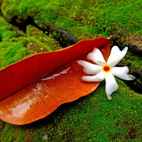 Love by Atreyee Sengupta - Nature Up Close Other Natural Objects