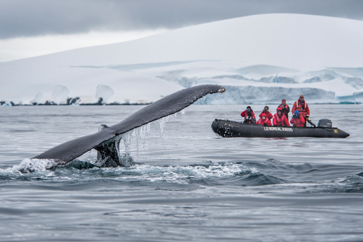 Ponant-whale-fin.png - See nature in a whole new way on a Ponant luxury expedition cruise when you set sail on Le Boreal from Ushuaia, Argentina, to Antarctica.