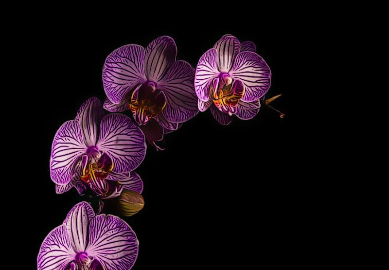 Orchidea di Maria Luisa Zoccolini