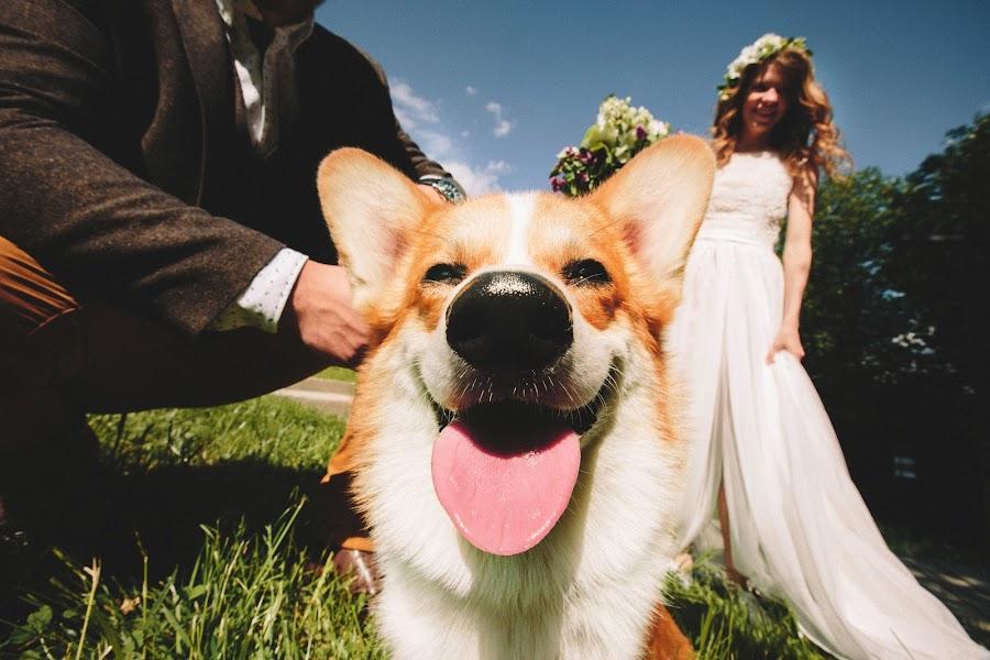 Wedding photographer Konstantin Gribov (kgribov). Photo of 14.09.2015