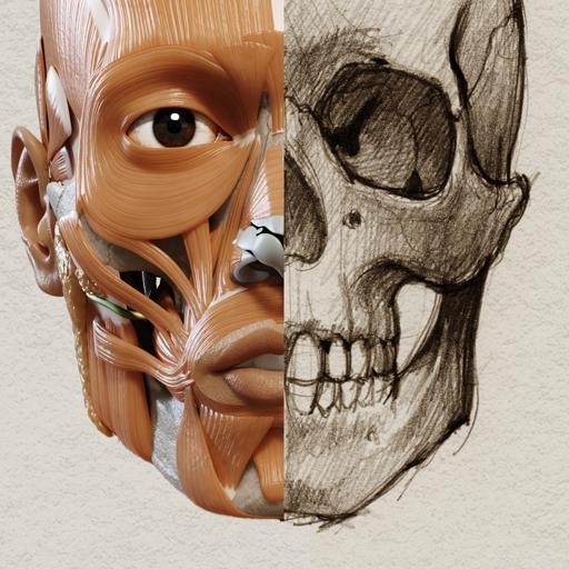 Baixar Anatomia 3D para artistas para Android
