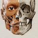 アーティストのための3D解剖学的構造