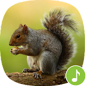Appp.io - Squirrel Sounds