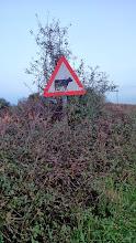 Photo: Осторожно, коровы!