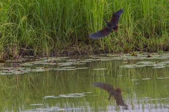 Photo: The heron on flight; A garça em voo.