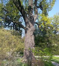 Photo: F4231205 w Ogrodzie Botanicznym