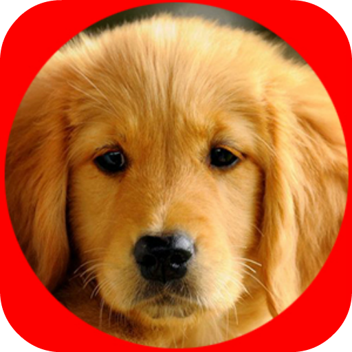 강아지의 상점 休閒 LOGO-玩APPs