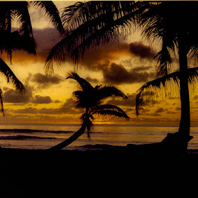 Your Beach by Robert Smith - Landscapes Sunsets & Sunrises ( developed color film, diego garcia, 1981, sunset, palm trees )