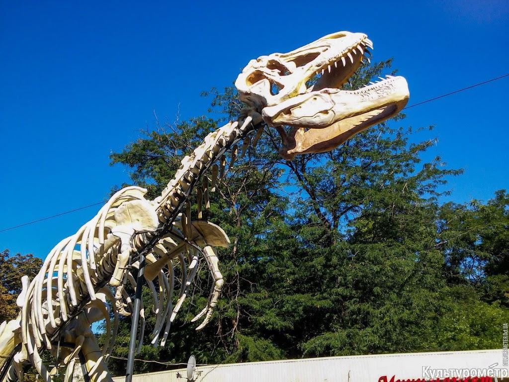 YP1Qitxq-mDuXBb9uXE2KSzyYY0_48oSJc-I2M3pDjGsulf-wn6LoP14hBH2nuHozEDpBeq7izPYLSc=w1366-h768-no В одесском парке установили скелет одного из самых опасных хищников