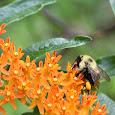 Bees = Life