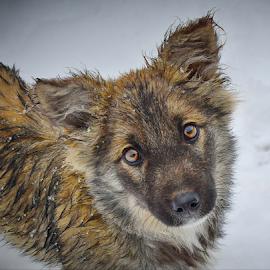 by Macinca Adrian - Animals - Dogs Portraits
