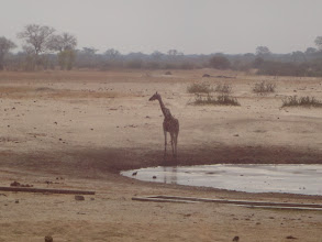 Photo: Oooh, maybe this side of the waterhole is better.