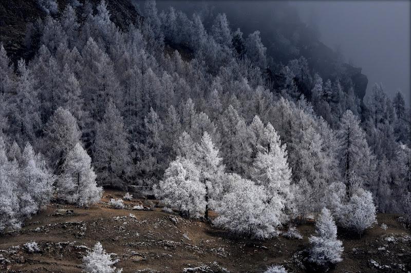 Il gelo e la luce di gigidueelle