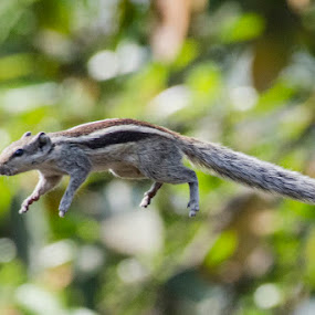   Catch me if u can    by Indra Maji - Animals Other Mammals