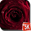 Red Rose Wallpapers HD icon