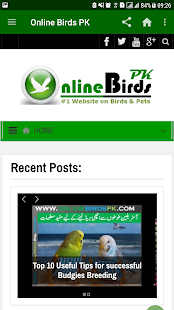 Online Birds PK - náhled