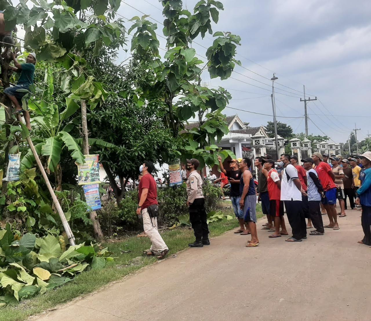 Warga Di Ponorogo Tewas Kesetrum Saat Potong Ranting Pohon