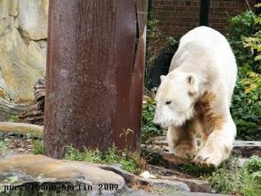 Photo: Knut unternimmt eine Baumbesichtigung ;-)