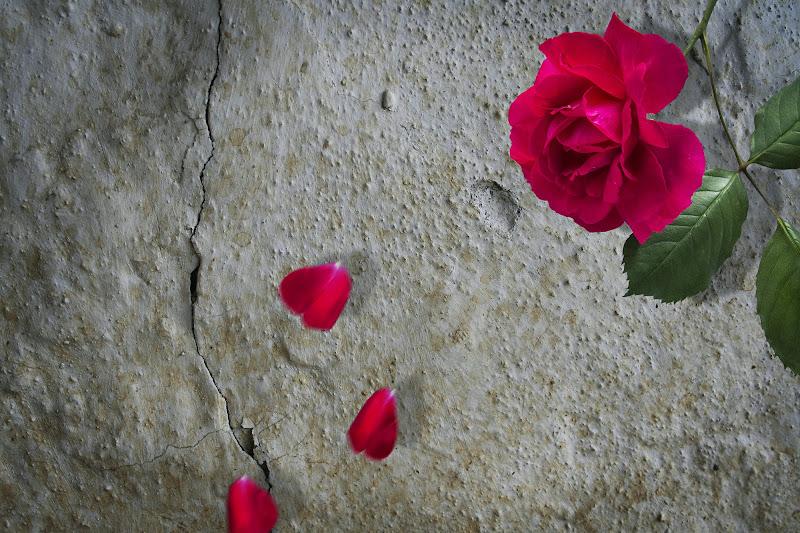 Delicata come una rosa.... di Iury olivieri