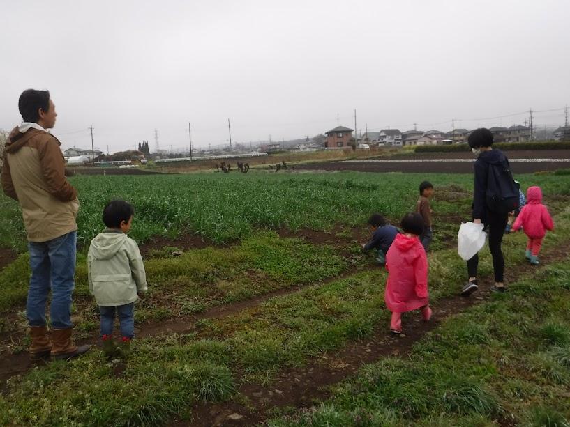 奥が小麦畑