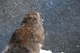 Photo: Squirrel in snow storm