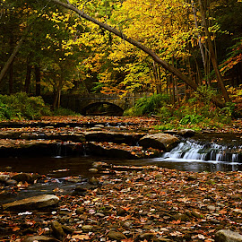 Autumn Respite by John Berry - Landscapes Waterscapes