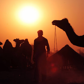 Silhouette  by Jazz Photography - Landscapes Travel ( camel, ajmer, pushka fair, sunset, lake,  )