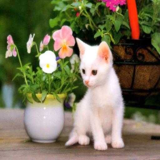 top cutest cats