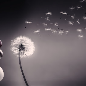 aint she dandy by Curtis Jones - People Fine Art ( blowing, dandelion, girls lips, pretty girl, lips, red lips )