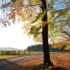 Countryside by Alina Vicu - Novices Only Landscapes ( countryside, autumn, colors, brown =, fall, dead leaves,  )