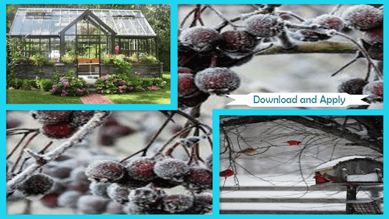 Best Winter Garden Step By Step - náhled