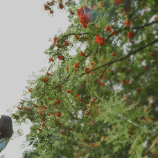 Wedding photographer Katerina Demidova (KatrinDmi). Photo of 29.06.2015