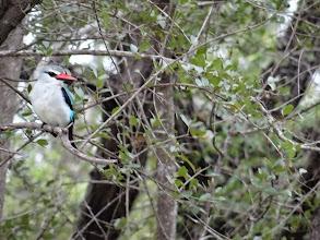 Photo: kingfisher(?)