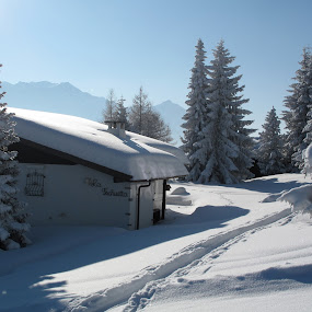 Chur, Brambrüesch, Graubünden, Switzerland by Serguei Ouklonski - Buildings & Architecture Other Exteriors ( forest, pine tree, deep snow, winter, cold, house, sun, fir, mountain, cold temperature, frost, cottage, vacation, snowcapped mountain, wood, resort, backlit, pinaceae, scenics, architecture, spruce, sky, no person, roof, nature, tranquil scene, tree, chalet, frozen, beauty in nature, evergreen, home, outdoors, blue, light, snow, alpine, silhouette, white color, window, travel, no people, landscape )