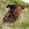 Speckled Owl b 15 06 2018.jpg