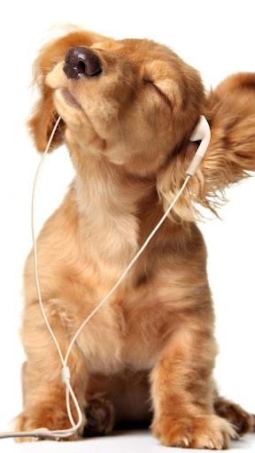 玩個人化App|小狗动态壁纸免費|APP試玩