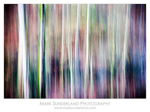 Photo: Autumn Colours at Dusk  Taken in fading twilight at West Burton, the white birch trunks here stood out in the gloom, almost inviting me to make an abstract image with vertical movement...  Canon EOS 5D, 24-105mm at 105mm, ISO 400, 1/5s at f4