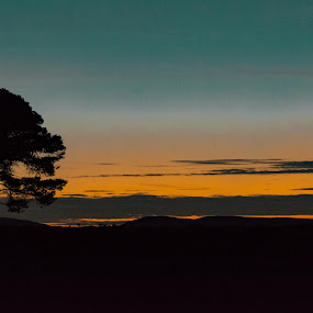 Lone Tree by J Licht - Landscapes Sunsets & Sunrises ( tree, sunset, sunrise, landscape )