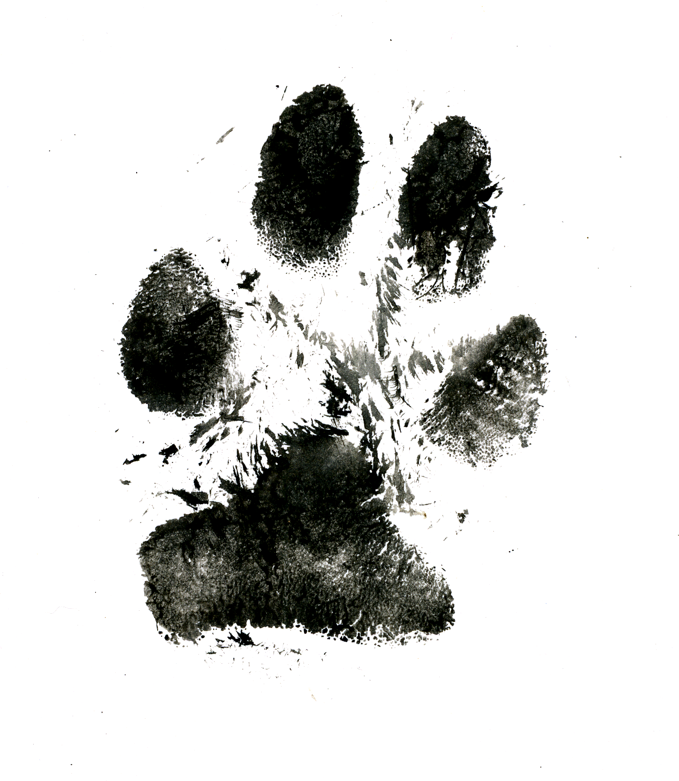dog · paw · india ink