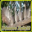 Canto de Zabele HD icon