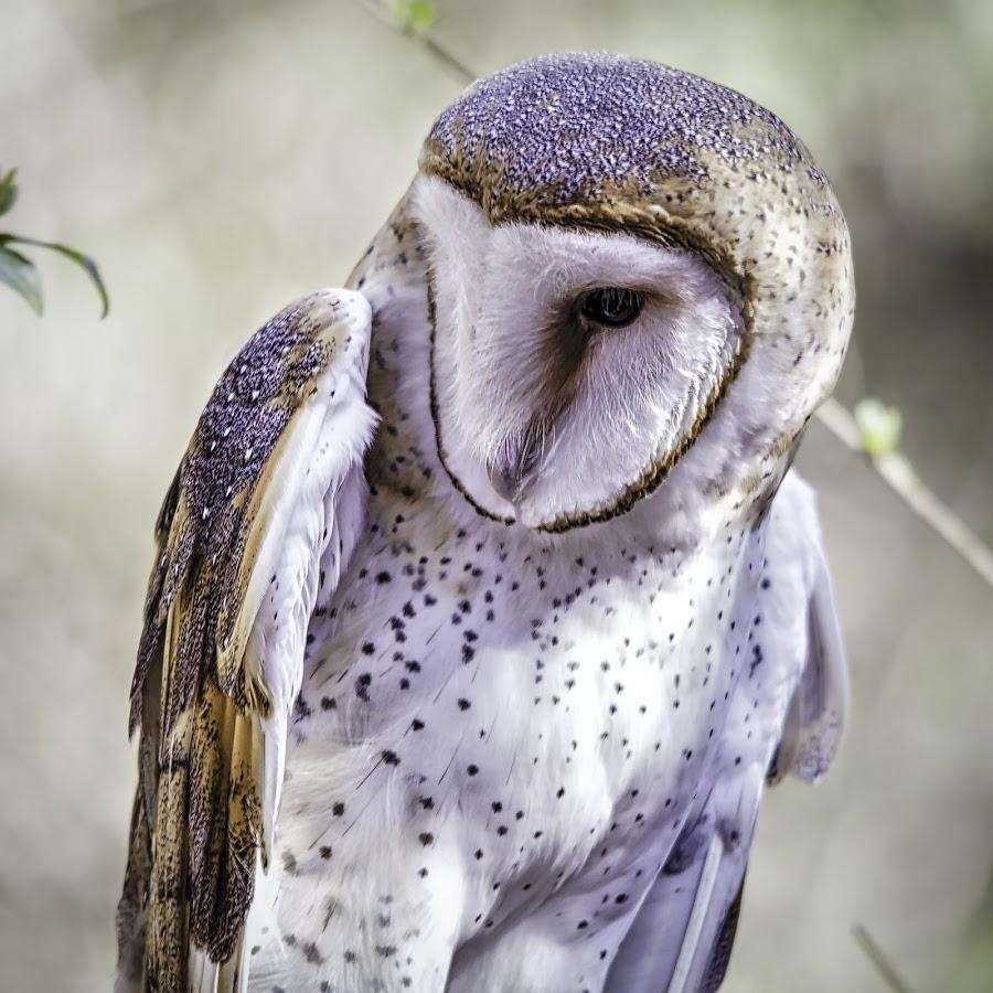 by Carol Plummer - Animals Birds