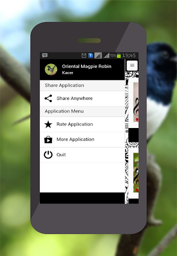 Oriental Magpie Robin for PC