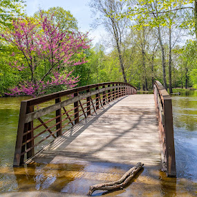 Flooded beauty by Tammy Scott - Buildings & Architecture Bridges & Suspended Structures ( waterscape, nature, nature up close, flooding, river, bridge, trees, landscape, nature photography )