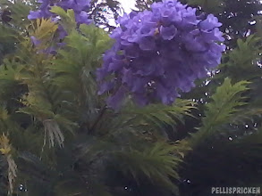Photo: Okänd vacker blomma på ett träd