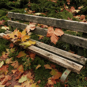 Autumn by Alena Ajaja Koutná - City,  Street & Park  City Parks